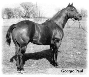 Reeds Poco Vandyke Quarter Horse